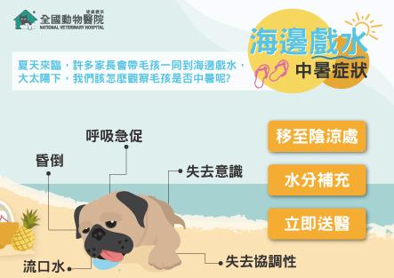 海邊戲水必注意!小心中暑別忽略│注意事項│預防方式│症狀處理