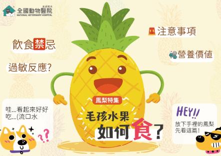 毛孩水果如何食-鳳梨特集