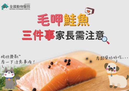 毛呷鮭魚,煮鮮食前必看三件注意事項!