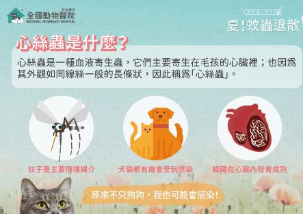 身處台灣,你必須懂得心絲蟲的心思│傳染途徑│症狀│如何預防