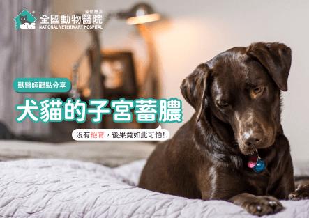 犬貓子宮蓄膿│摘錄文章與獸醫師觀點分享