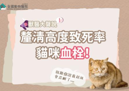 釐清高度致死原因!貓咪血栓的可怕是因為其天性導致?