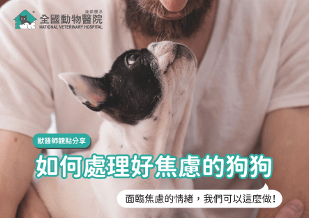 獸醫師給主人的建議:如何處理好焦慮的狗│摘錄文章與獸醫師觀點分享