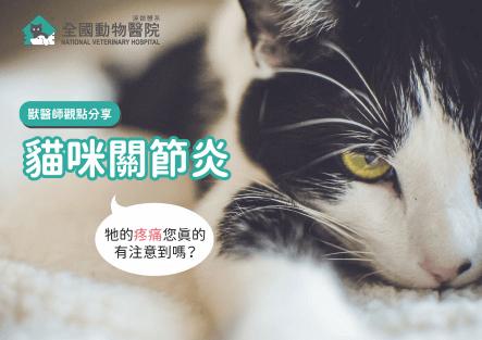 貓咪關節炎:貓的疼痛你注意到了嗎?│摘錄文章與獸醫師觀點分享
